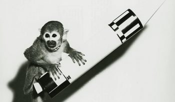 Animals That Went Into Space